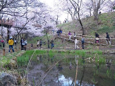城址公園には池もある~