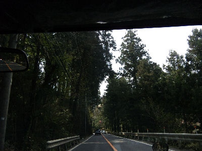 檜原村の森林の中を