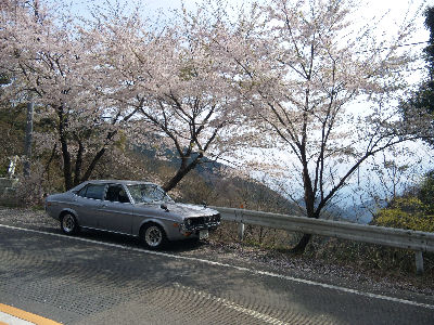 マツダルーチェと桜