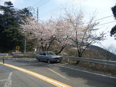 マツダルーチェと桜の木