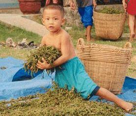 ベトナム胡椒