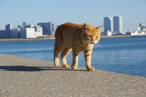 ふてぶてしい顔 猫