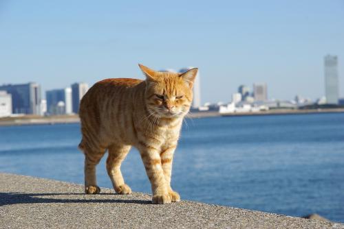 眼飛ばし猫