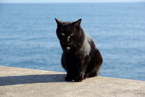その他 黒猫 茜