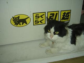 猫並び(笑)