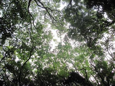 森は鳥の声とセミの声だけ