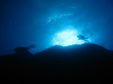 上を泳ぐダイバー!