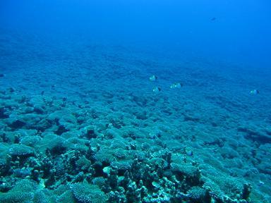珊瑚パラダイス!