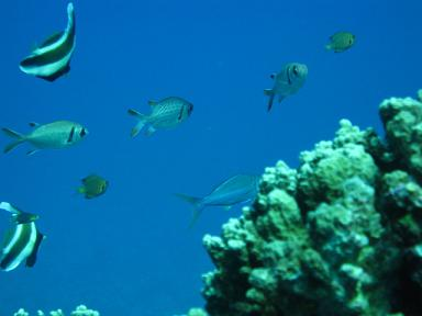珊瑚の根のまわりは色んな魚がいっぱい!