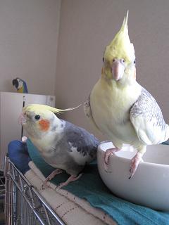 いつも一緒の2羽♪
