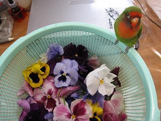 お花で遊びたいの・・・。