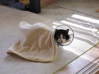 毛布にゃんこです(笑)