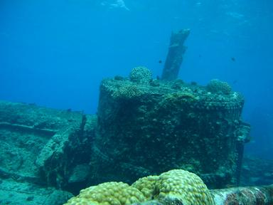珊瑚が育ってました!