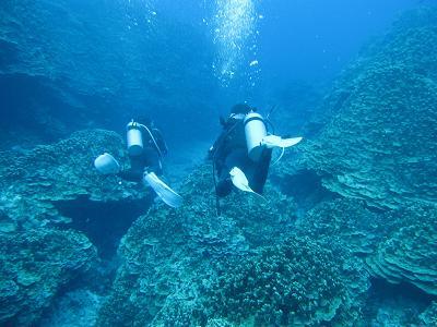 珊瑚の間を泳ぎます~♪