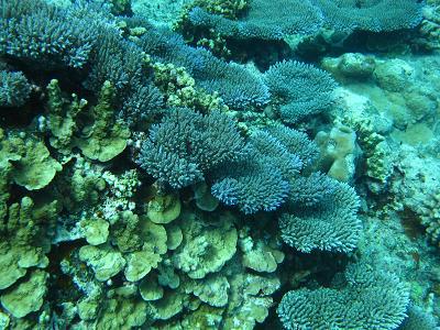 珊瑚も綺麗♪