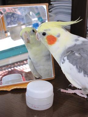 鏡が大好きなきゃら