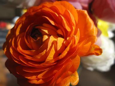 情熱のオレンジ!