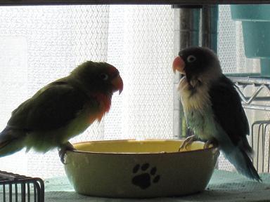 一緒に水浴びデス♪