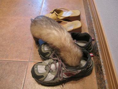 あや吉の靴匂い嗅ぎ中・・・(知らんぞ~:笑)