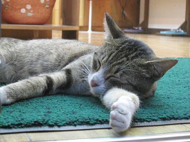 店先で熟睡のニャンコちゃん♪