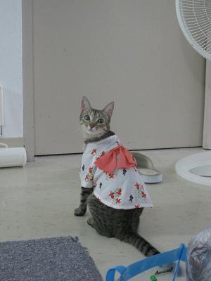 チィちゃん浴衣バージョン!