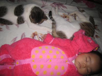 ネコとタッキー