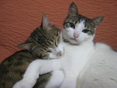 ラッキー&ミラ1