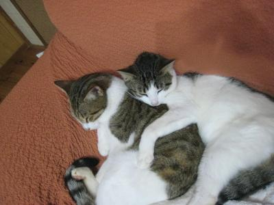 ラッキー&ミラ2