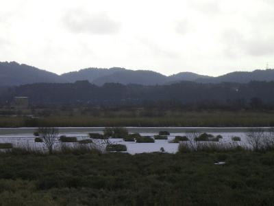 2011.hakuchou 006