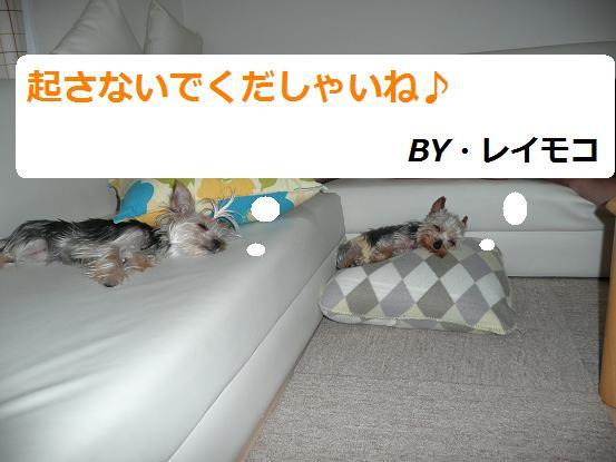 007_20090727071011.jpg