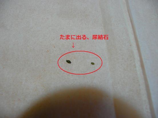 007_20090917183120.jpg