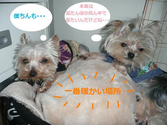 009_20100108074839.jpg