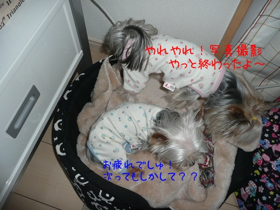 009_20100121184524.jpg