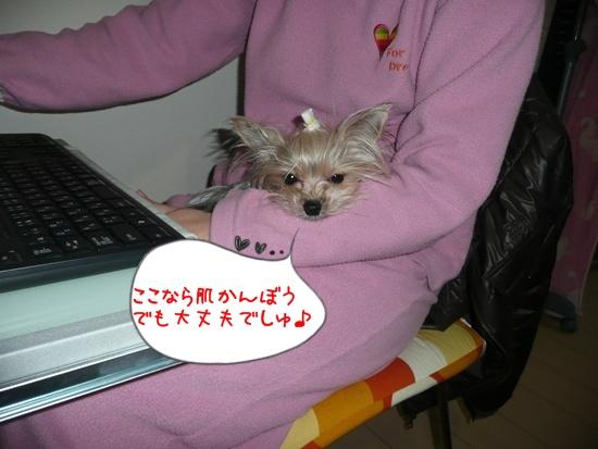 010_20100204190525.jpg
