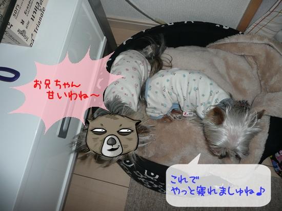 011_20100121184524.jpg