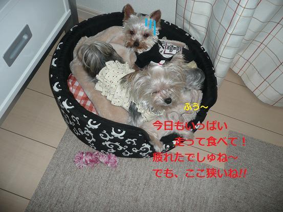 014_20091227205200.jpg