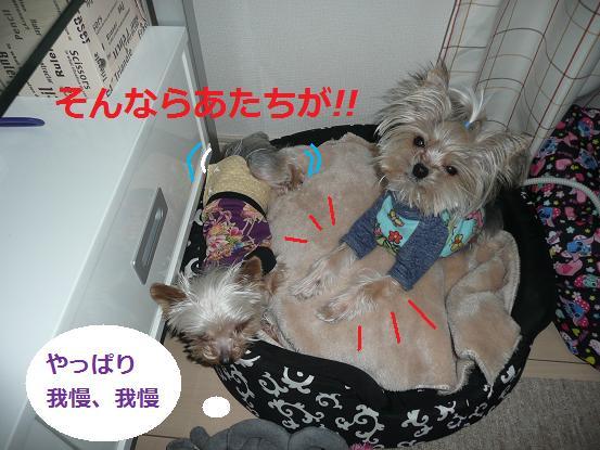015_20100108074839.jpg