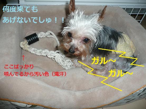 016_20090727221141.jpg