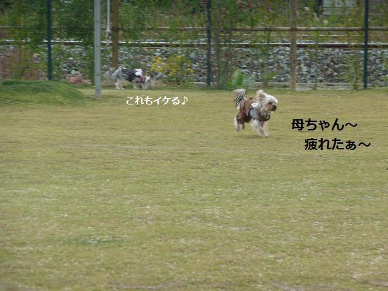 017_20091121074058.jpg