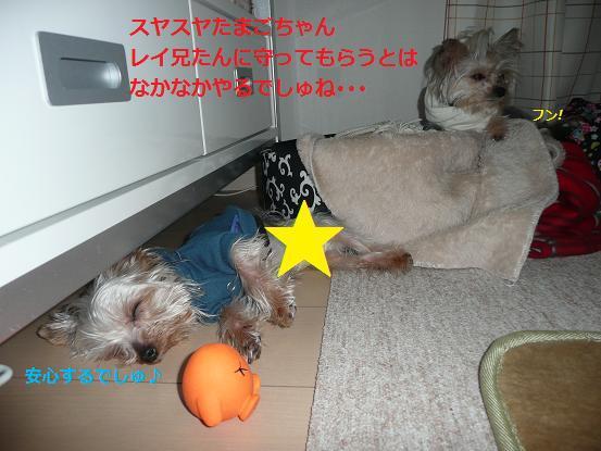 017_20100111172649.jpg