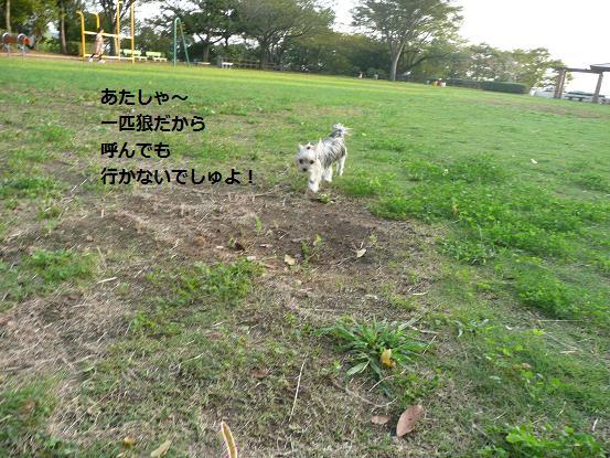 018_20091007085813.jpg