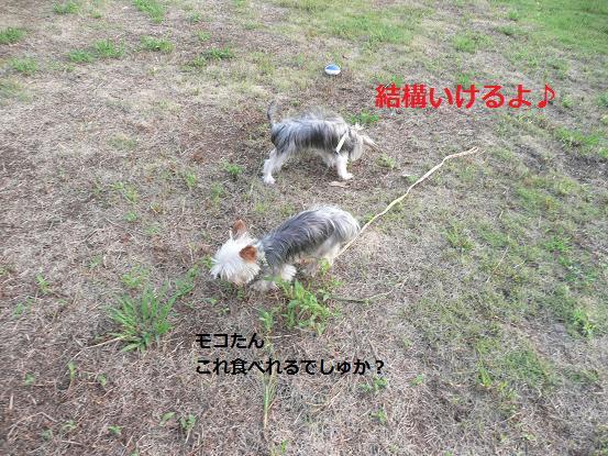 022_20091007090800.jpg