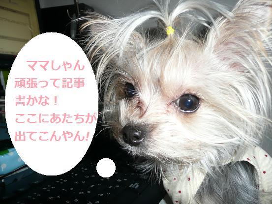 022_20091231084018.jpg