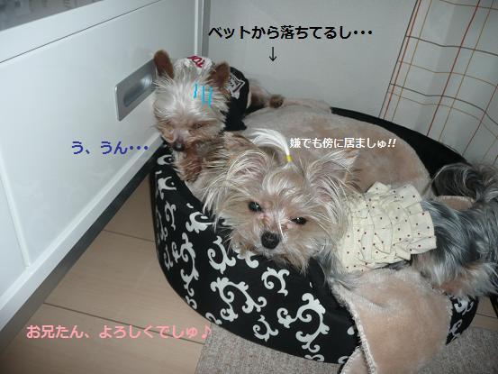 022_20100102182336.jpg
