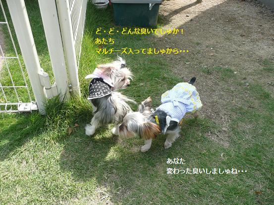 023_20091012180800.jpg
