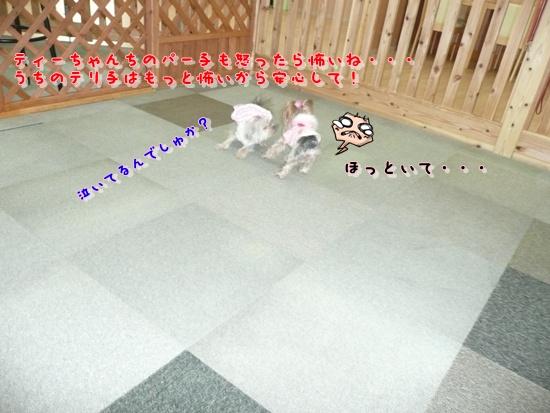 027_20100119172521.jpg