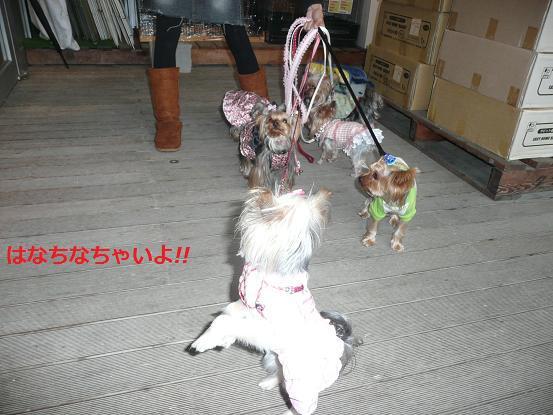 035_20091127172641.jpg
