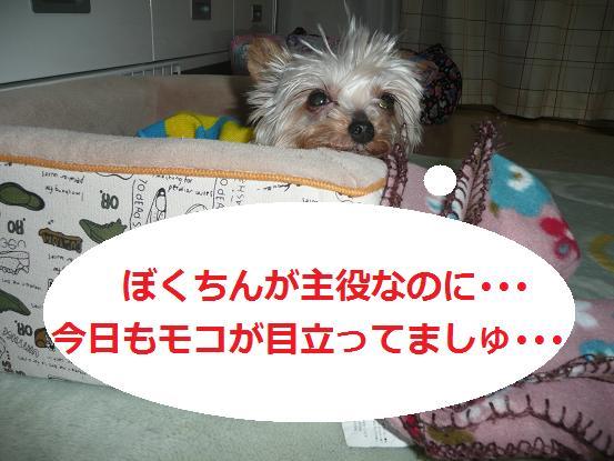 036_20091019064956.jpg