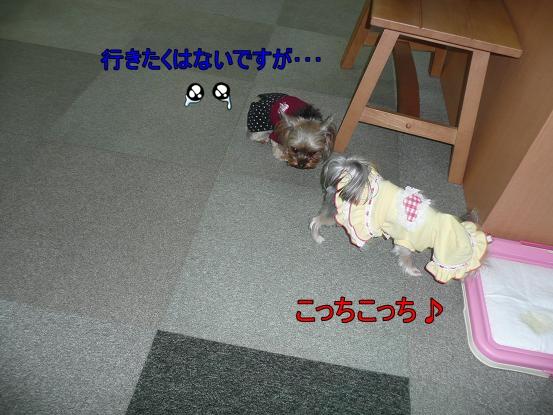 039_20091217180531.jpg