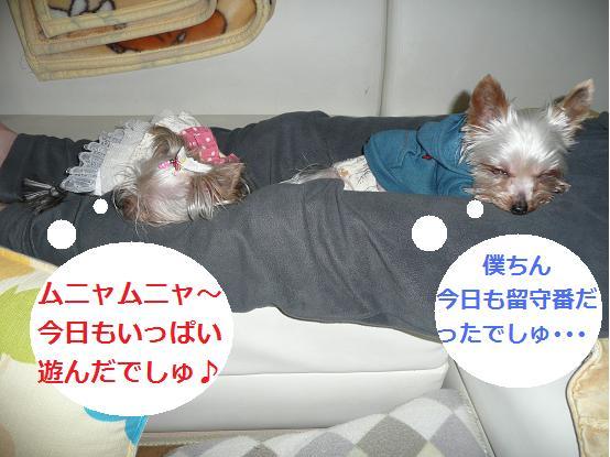 046_20091130070003.jpg